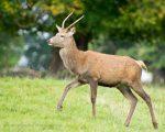 Young Bucks at Studley Royal