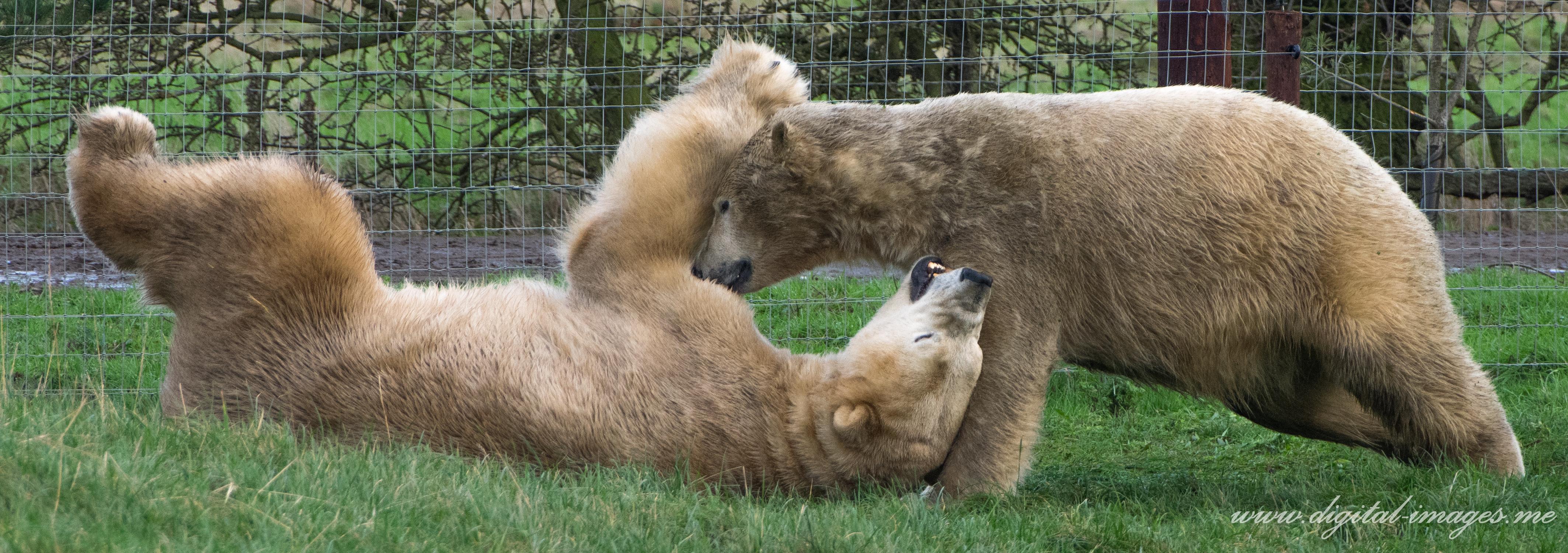 Polar Bears, Favourite Subjects of 2016