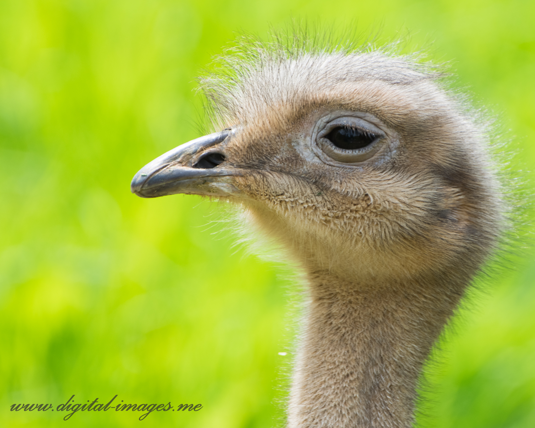 Portraits of an Imperious Rhea