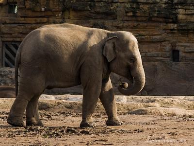 081012--Elephants--12.jpg