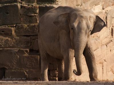 081012--Elephants--09.jpg
