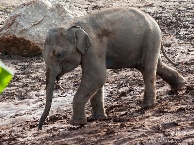 081012--Elephants--05.jpg