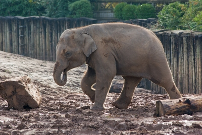 081012--Elephants--03.jpg