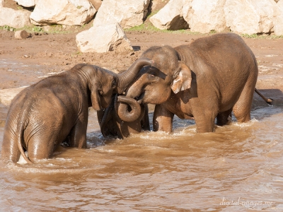 081012--Elephants--52.jpg