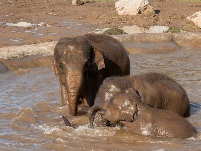 081012--Elephants--63.jpg