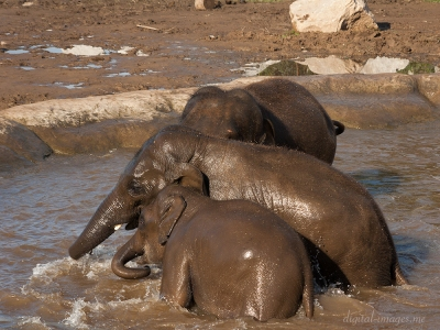 081012--Elephants--66.jpg