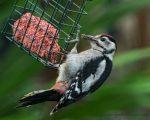 Wet Woodpeckers