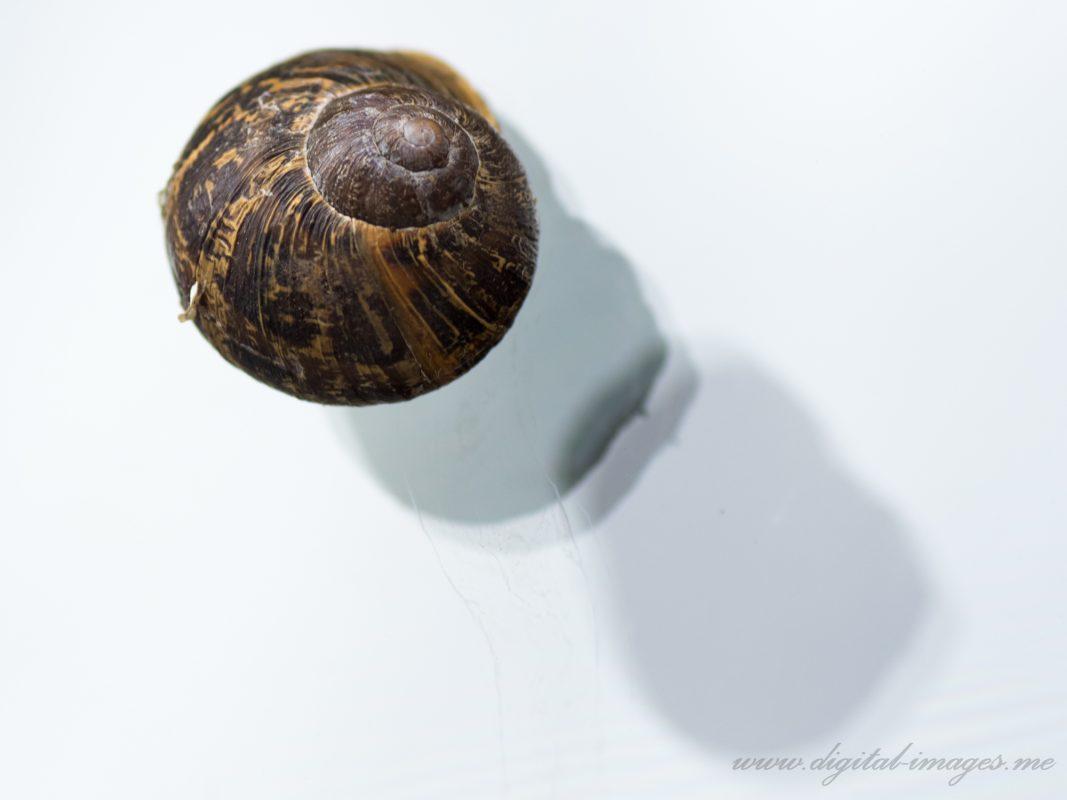 Snails Window
